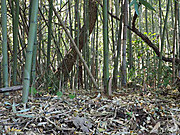 kuroyatusiro1
