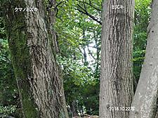 mizuki22