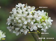 nobuki1211_20
