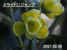 hiragin33255