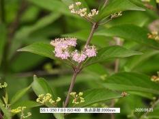 komura10201