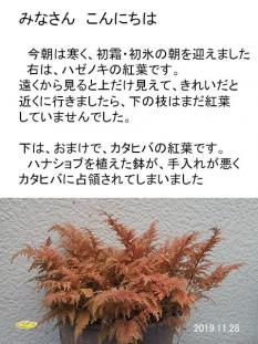 kouyou11127