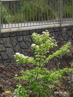 kumanomizu24148