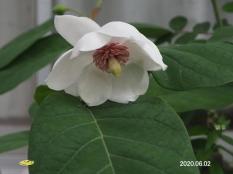 obaoyama66774