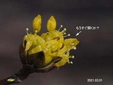 sansyu53428