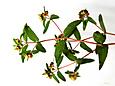 1)花のついた枝